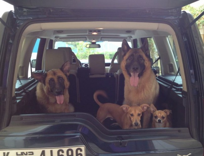 Dubai Kennels Tips To Deal With Dog Car Sickness