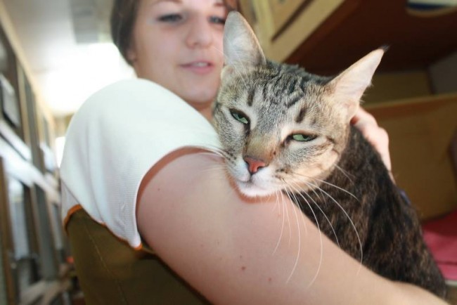 Cattery And Kennels In Dubai Tips On Adopting The Perfect Pet