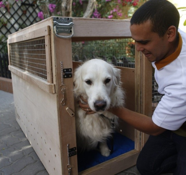 A Man Putting a Dog in a Travel Box