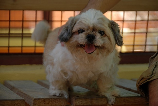 A Cute Overweight Dog