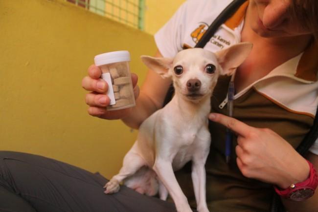 Dog with medication