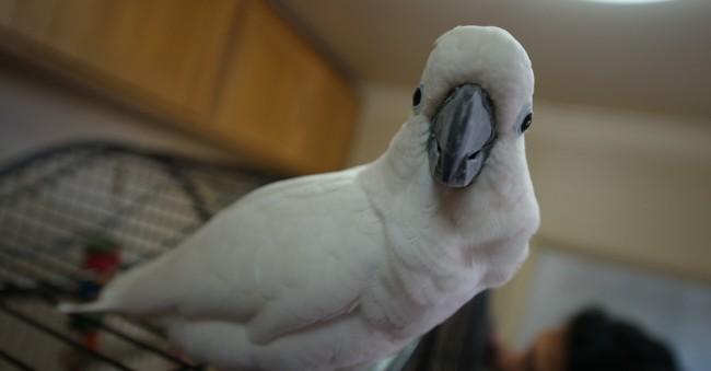 Polly the bird