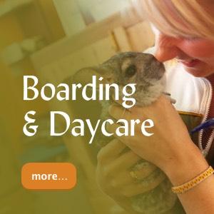 Boarding & Daycare