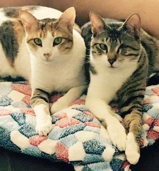 Mila & Wee T