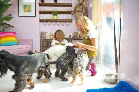 dog daycare dubai