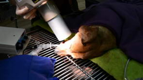 Taking Dental X-rays of your Pet