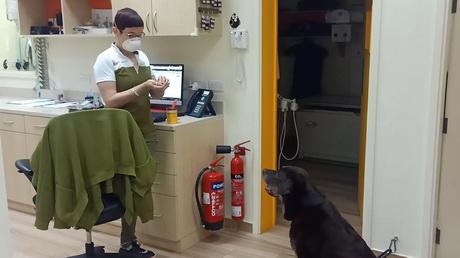 Medicating Made Easy = A Hungry Labrador!