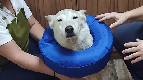 The Cone(s) of Shame